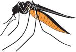 Is Zika virus in Majuro?