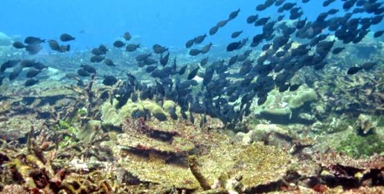 Severe coral mortality in Kosrae