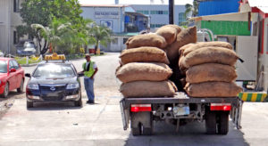 This delivery of copra was recently off-loaded from the Aemman vessel, put onto the truck, weighed and then delivered to the Tobolar Copra Processing Authority plant. Photo: Hilary Hosia.