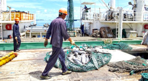 A purse seiner transships its catch of skipjack tuna to a carrier vessel in Port Majuro. Photo: Hilary Hosia.