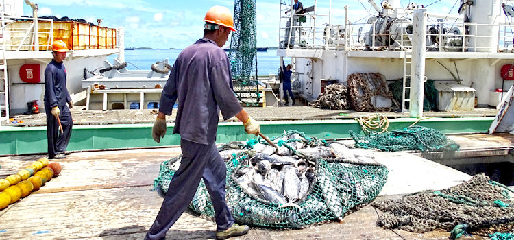 Tuna operations ramp up