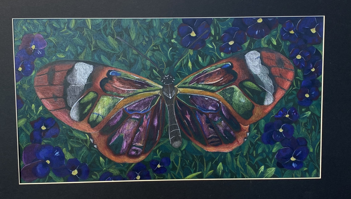Beautiful Butterfly (Colored Pencil)