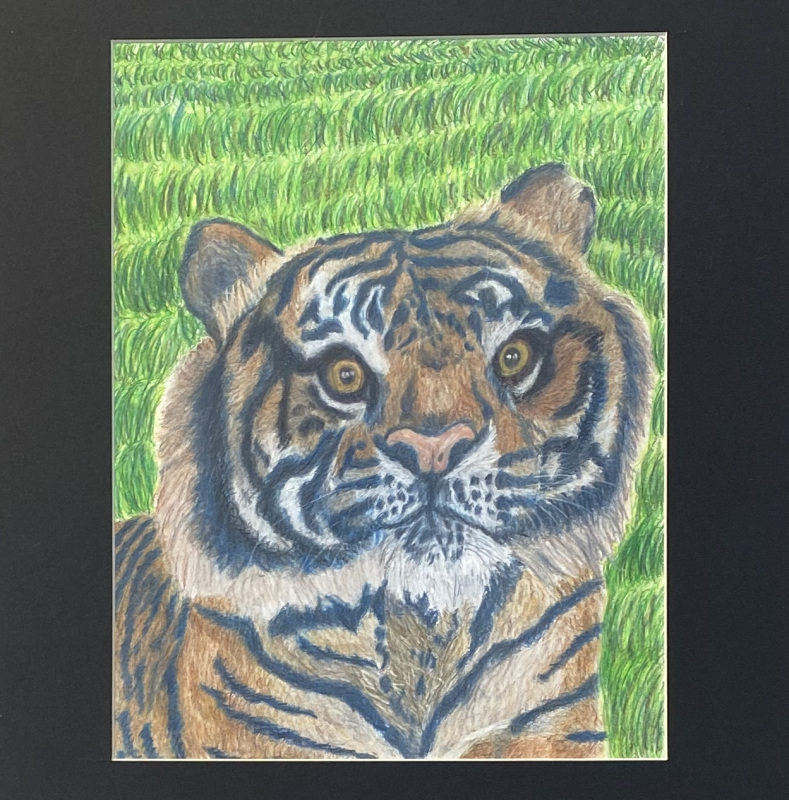 The Eye of the Tiger (Colored Pencil)