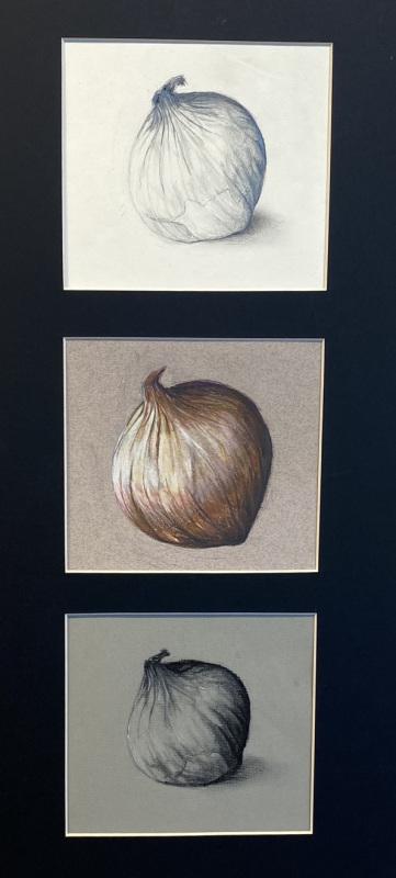 Onion Study (Charcoal/Graphite Colored Pencil)