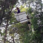 Emergency Tree Removal Loxahatchee, West Palm, Royal Palm Beach