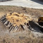 Stump-removal-stump-grinding-boynton-beach-savemore-tree-service-2