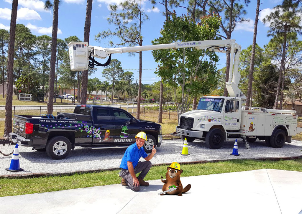 Tree Services in Palm Beach County - SaveMore Tree Service