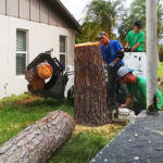 Tree Removal Jupiter - SaveMore Tree Service