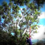 Tree Pruning and Trimming Loxahatchee, Royal Palm Beach, Wellington 561-513-7883