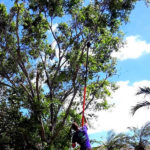 Tree Trimming Loxahatchee, Tree Trimming Royal Palm Beach, Tree Trimming West Palm Beach, Tree Trimming Wellington, Tree Trimming Jupiter - SaveMore Tree Service