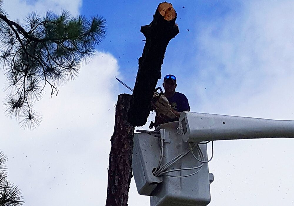 Tree Removal in Wellington, FL - SaveMore Tree Service