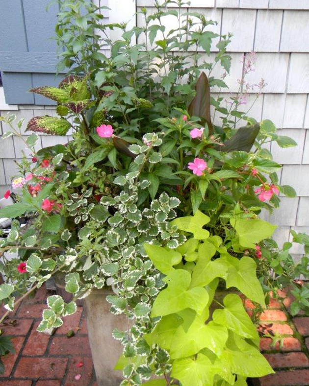 Container Gardening Service New Canaan, CT