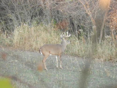 deer18