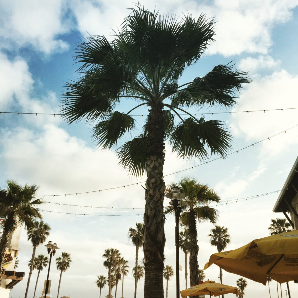 Palm trees in Orange County!