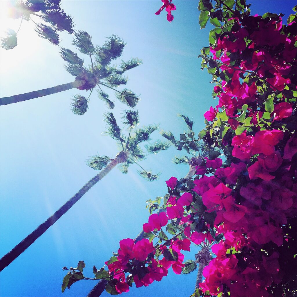 Looking up to the sky with views of palm trees and flowers.