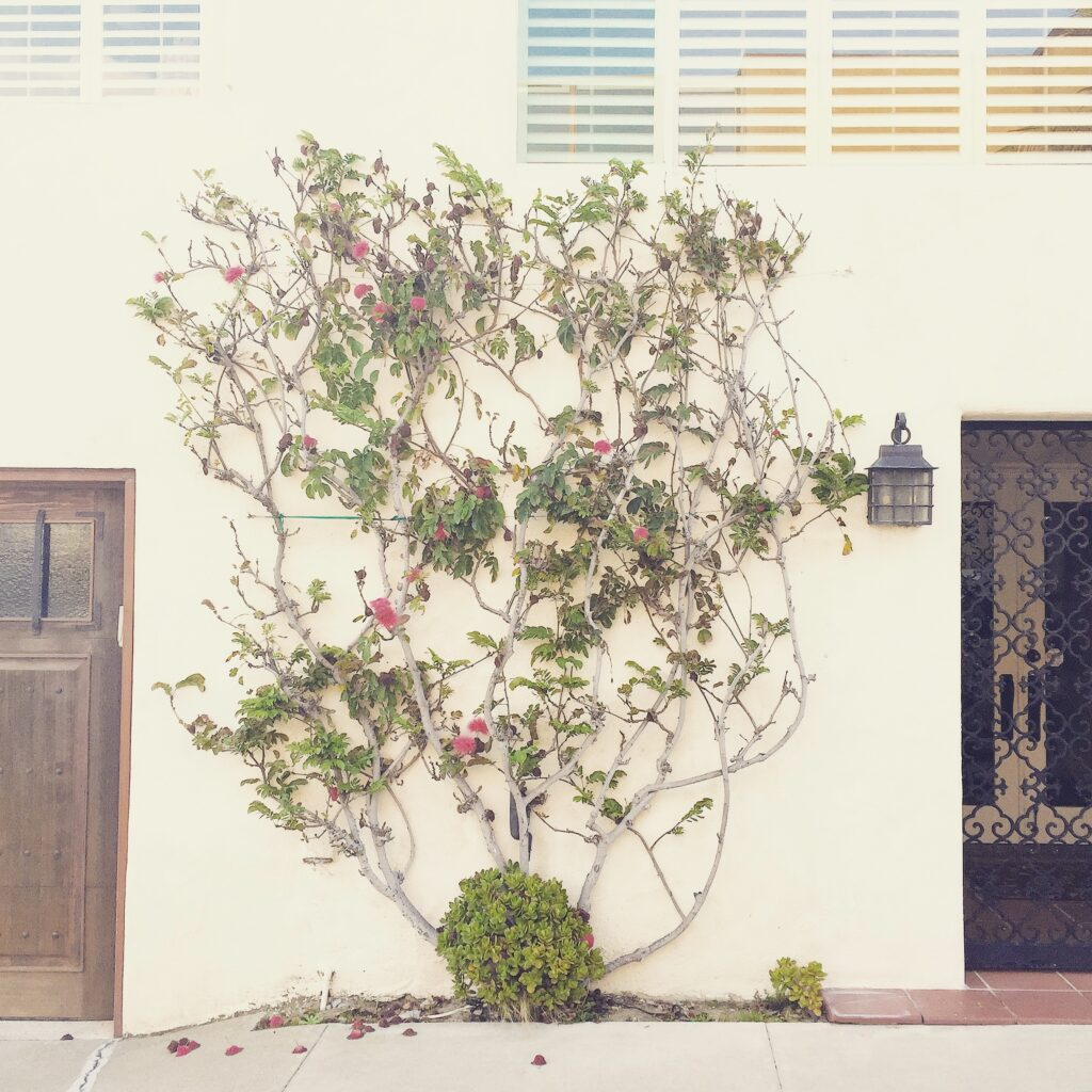 More beach house fronts with a shrub and branches.