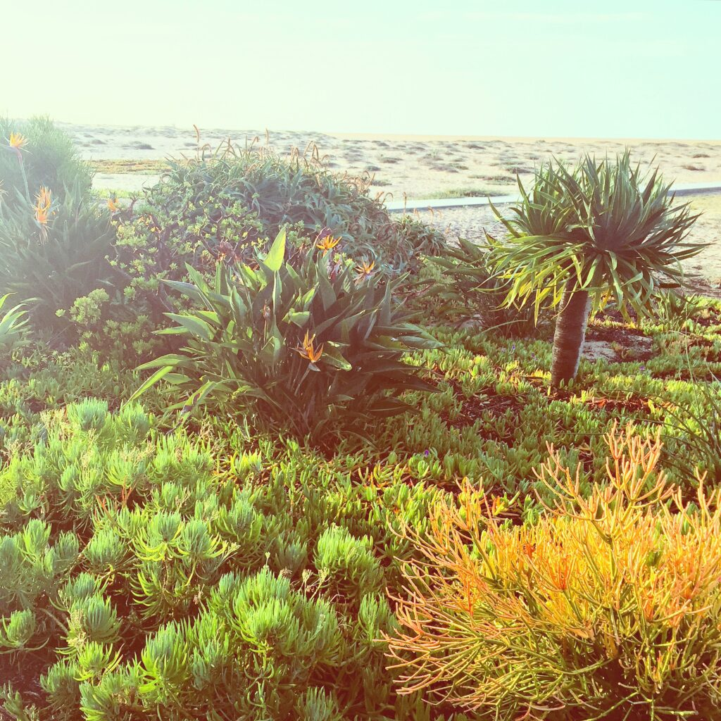 Flora, beach and sky.