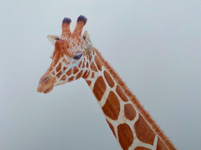Diane Kinney 333 Giraffe Other media $125