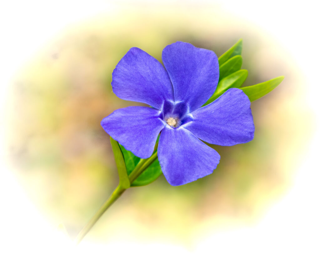 Herb Kemme Periwinkle Photography $85