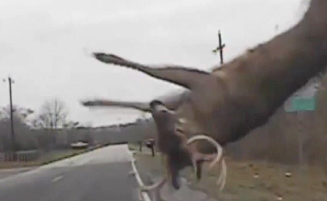 flipping deer