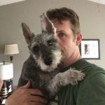 mini schnauzer with doggie diabetes