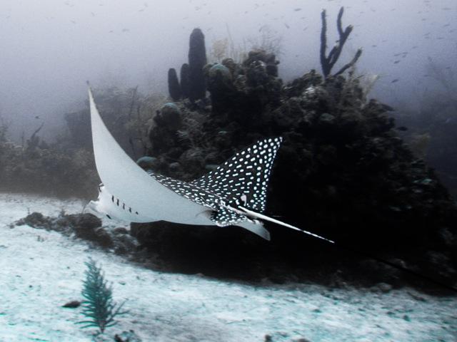 Snorkeling On Roatan