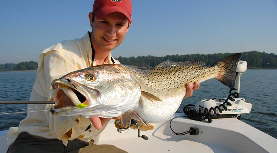 Speckled Trout Chesapeake Bay