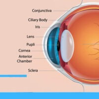 Eye and Vision Conditions
