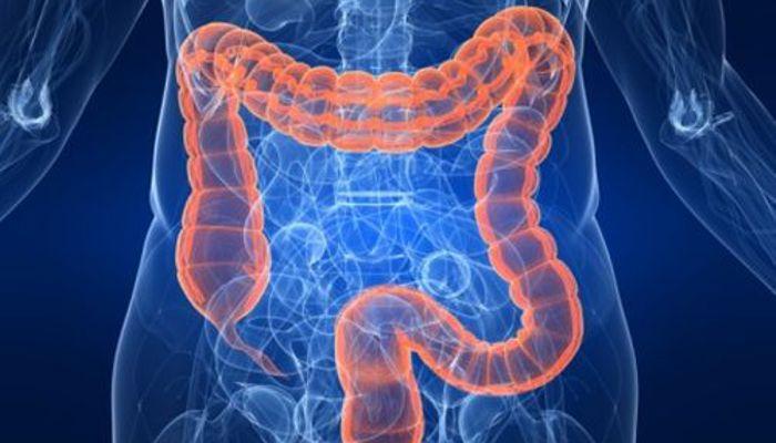 The colon