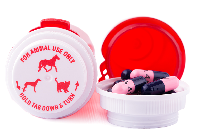 Pet Meds & Prescription Refills for Dogs & Cats | Sky Canyon Veterinary Hospital | Grand Junction Colorado