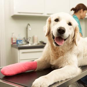 Pet Care Tips Info Center   Sky Canyon Veterinary Hospital   Grand Junction, Colorado