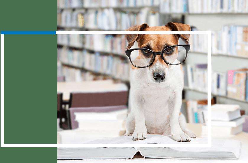 Pet Care Tips Info Center | Sky Canyon Veterinary Hospital | Grand Junction Colorado