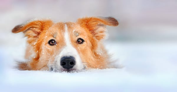 How To Spot Hypothermia In Dogs & Cats