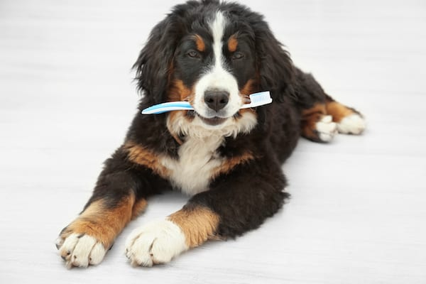 Cat & Dog Teeth Cleaning Guide | Sky Canyon Veterinary Hospital | Grand Junction Colorado