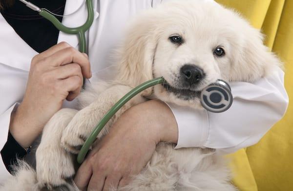 Puppy Care Tips   Sky Canyon Veterinary Hospital   Grand Junction Colorado