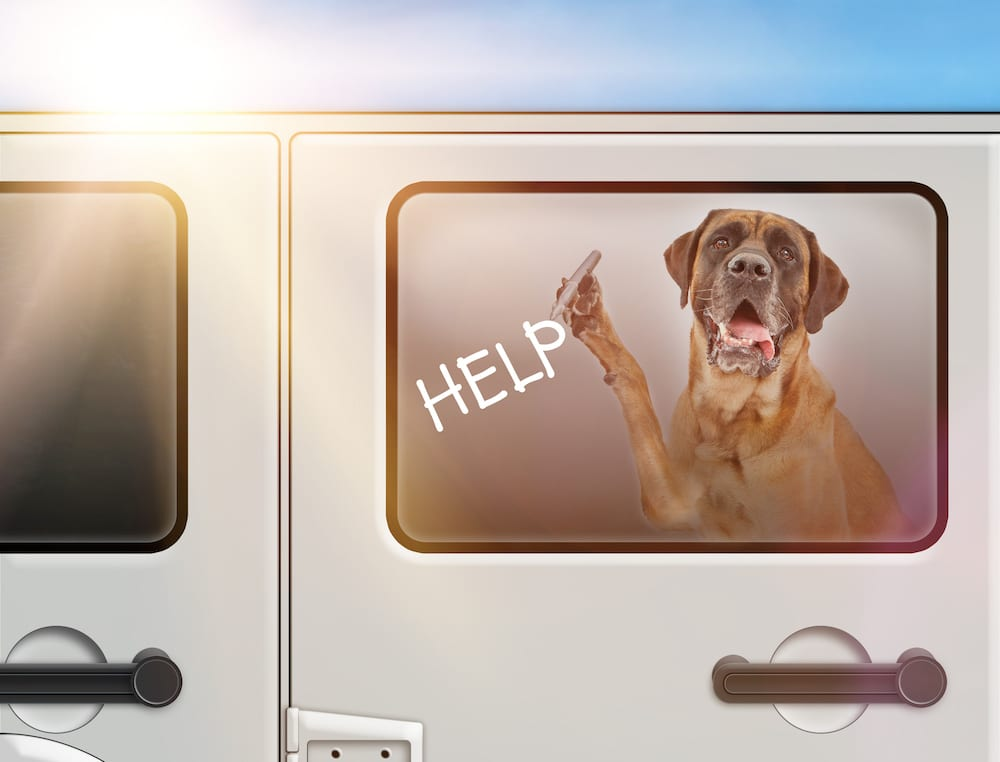 Colorado Dog In Hot Car Law Info | Sky Canyon Veterinary Hospital | Grand Junction Colorado