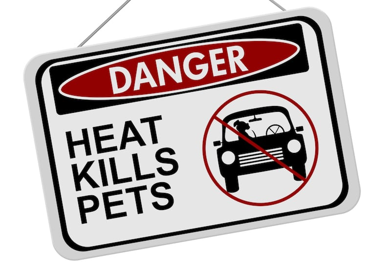 Guide To Heat Stroke In Dogs | Sky Canyon Veterinary Hospital | Grand Junction Colorado