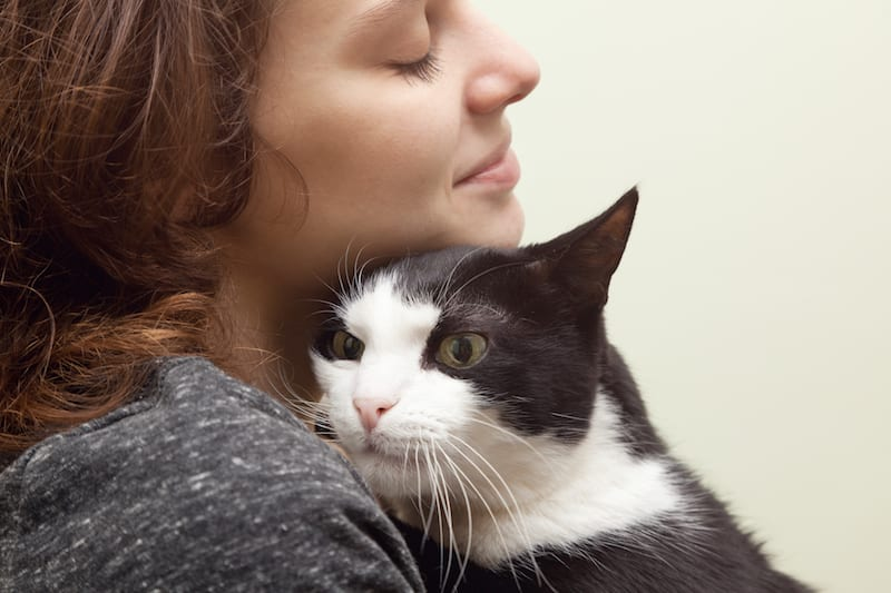 Cat Adoption Tips: 10 Signs Of A Healthy Shelter Cat