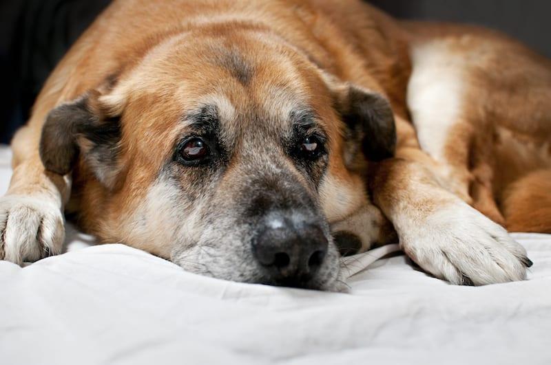 Pet Hospice Care | Sky Canyon Veterinary Hospital | Grand Junction, Colorado