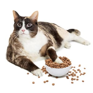 Pet Obesity Tips | Sky Canyon Veterinary Hospital | Grand Junction Colorado