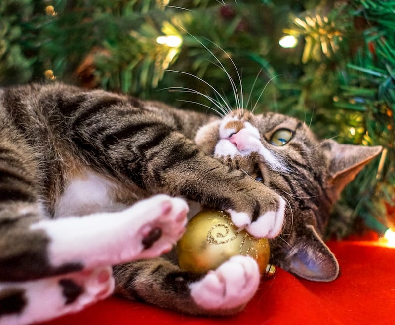 Holiday Hazards For Pets | Sky Canyon Veterinary Hospital | Grand Junction Colorado