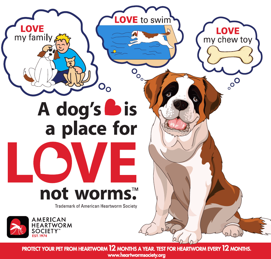 What You Should Know About Canine Heartworms
