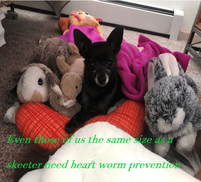 April Is Heart Worm Awareness Month