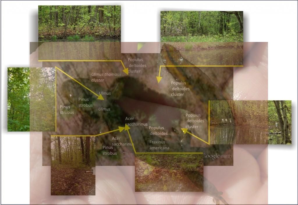 Surrounding_vegetation