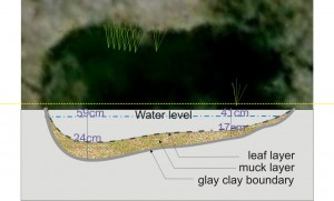 Figure 2. Sketch of contour of the pool along the cut in the picture including measurements of water and muck depth to clay layer. Notice in the picture the location of submerged vegetation in the pool.