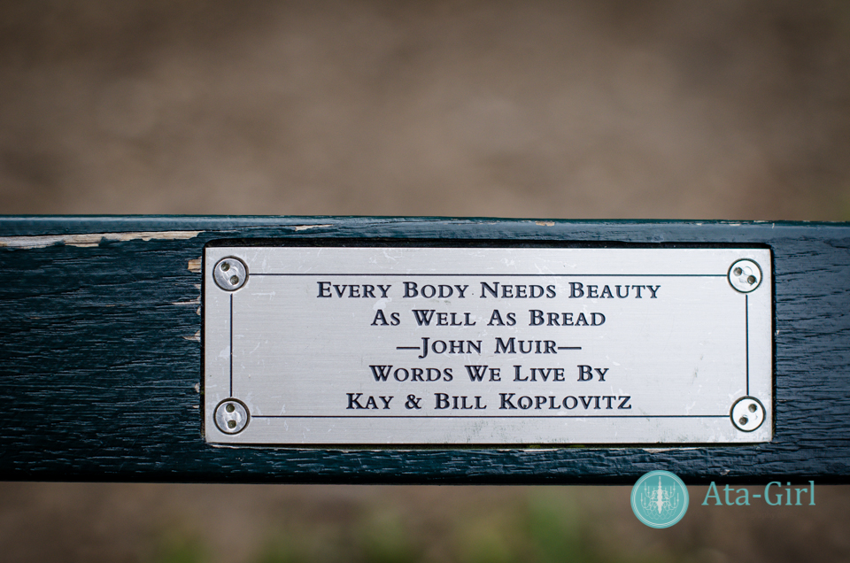 centra_park_benches_wedding_photographers_atagirl_photographyd7i_1769-jpg