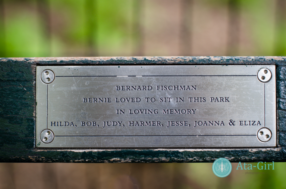centra_park_benches_wedding_photographers_atagirl_photographyd7i_1781-jpg