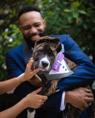McGruff giving some serious puppy eyes!⠀⠀⠀⠀⠀⠀⠀⠀⠀ .⠀⠀⠀⠀⠀⠀⠀⠀⠀ .⠀⠀⠀⠀⠀⠀⠀⠀⠀ . ⠀⠀⠀⠀⠀⠀⠀⠀⠀ #dogphotographer #dogportrait #dogdad #dogmom #dogsofinstagram #dogsofstpete #weddingdayideas #weddingsinspo #dogtux #dogbowtie #dogsofinstagram #puppy #bestdog #dogofhonor #wedding #weddingpetcare #furryventureswedding