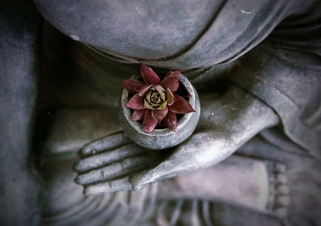 meditate-flower