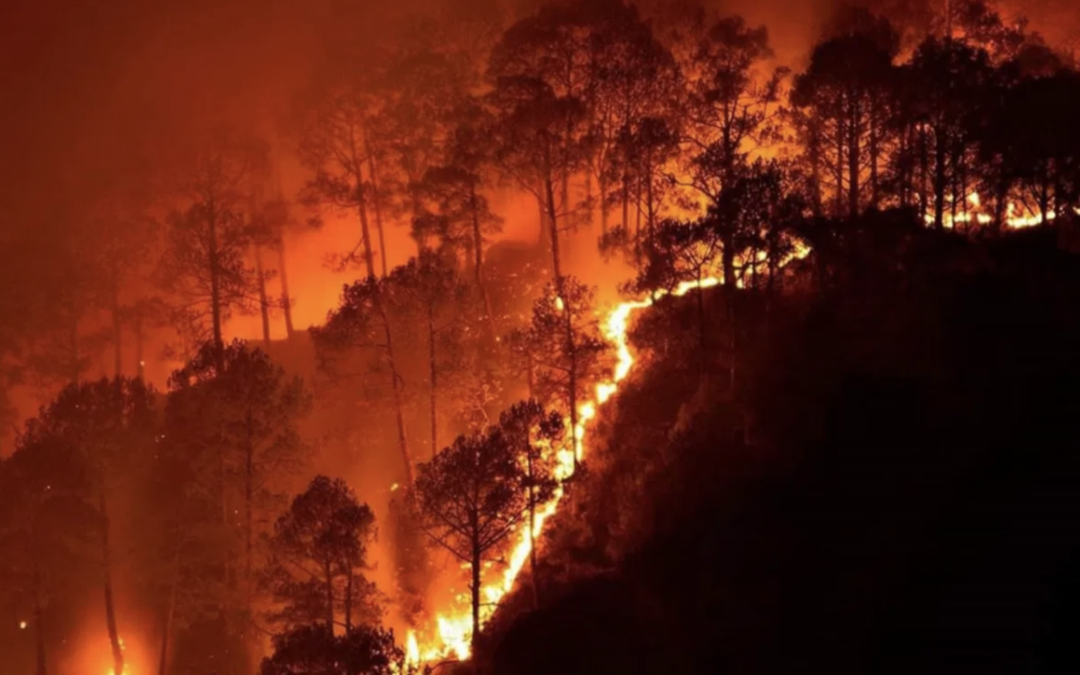 Will California's wildfire prevention efforts be enough?